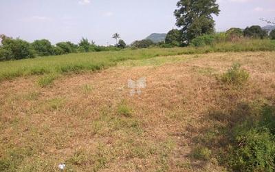 cherry-farm-in-wagholi-elevation-photo-1uxw