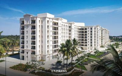 cypress-in-242-1598857586213